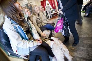 Elever från naturbruksgymnasiet som har specialinriktningen hund fick en givande och praktisk lektion om terapihundar.