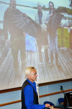 Björn Helander berättade att havsörnen är miljögiftsdrabbad – igen.