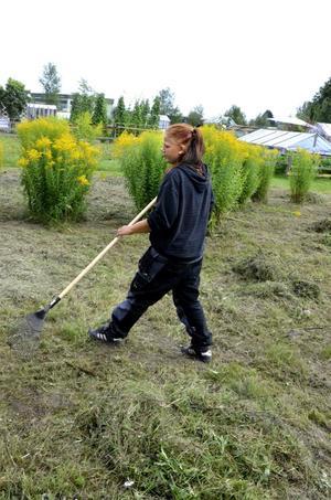 Gör fint. Emma Åsbom krattar bort det nyklippta gräset. Bild: Lars-Ivar Jansson