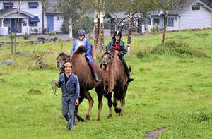 Kamelkaravan. Per-Ola Magnusson i Viker leder kamelerna Kalle och Anna, mellan pucklarna sitter Margareta Prag och Madeleine Hermansson från Blå stjärnan.