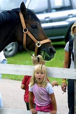 Foto: LEIF JÄDERBERGVilken vacker häst. Ida Stenlund, 4 år, tittar storögt på ridhästen som fanns i hagen på Hästivalen. Ida älskar hästar och är inte ett dugg rädd för dem.