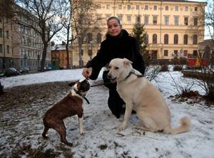 Det är framförallt när hundar träffas i städer och tätorter som kennelhostan sprids över landet. (Hundarna och Camilla Thulin på bilden har inget direkt samband med artikeln).