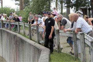 Björnarna tilldrog sig stort intresse under besöket i Junsele djurpark. Foto Uno Gradin