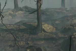 De mycket torra markerna gör att det väldigt lätt antänds i skog och mark nu