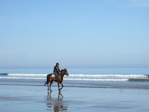 En tidig morgon på en strand i Sabah på Borneo tog jag denna vackra bild! Det var bara jag och ryttaren med sin häst. Vackert och fridfullt!