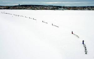 Starten har gått. Ett drygt femtiotal hundspann ger sig iväg för en 42,2 mil lång fjälltur mot målet i Röros.
