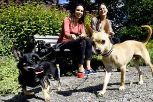 Ett hundliv. Parken är perfekt för Annie Söderberg och Frida Bergström och deras chihuahor....