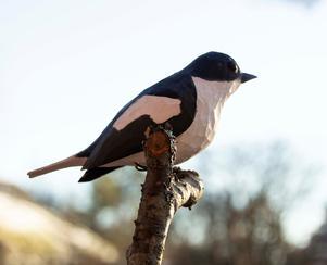 En av de nya konstnärerna i år är Börje Svedman, som gör träfåglar.