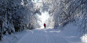 Örebro län har gott om naturreservat och möjligheter till ett omväxlande friluftsliv. Något som kommit väl till pass under coronapandemin. Den här bilden är fotograferade i vid Tomasboda i Kilsbergen med fina skidspår en snörik vinter. Foto: Åke Eriksson
