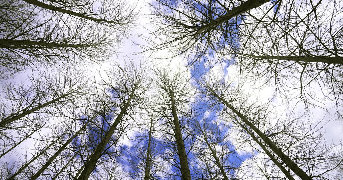 Rekordkraftig prisuppgång på skogsmark