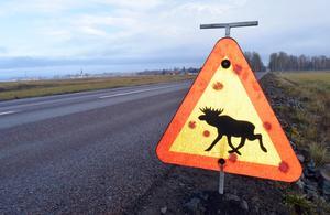 Trafikverket eller kommunen kan besluta om placering av tillfälliga varningsskyltar och de brukar sitta uppe i mellan två och fyra veckor.