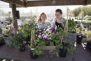 Linn Grejs och Lisa Rönnow vill uppmana hemmaodlare till att våga mera. Tänk större, tänk nytt, våga träd, våga beskär! Själva vågade de öppna eget tillsammans med Magdalena Jansson och öppnade egna handelsträdgården Blomboa i Bjursås.