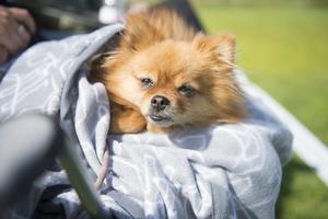 Husdjuren lider av värmen. Fuktiga filtar och PET-flaskor med iskallt vatten kan hjälpa djuren att hålla sig svala.