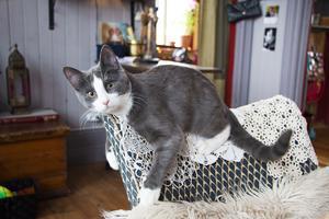 Katten Micke är bara ett halvår och därmed husets nyaste invånare.