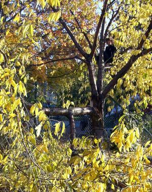 Med ett omkullblåst träd över banan blir det väldigt mycket svårare att spela boule i Liljekvistska parken. Varför missköter kommunen den annars så välgjorda parken? undrar