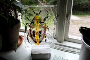En av Maries utrotningshotade skalbaggar av glas i ett av bostadens många fönster.