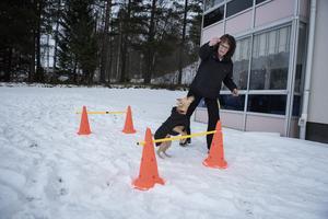 Molly älskar all form av aktivering. Här visar de upp hur duktig hon är att hoppa över hinder.