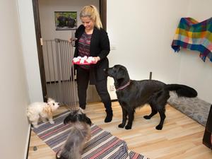 Ett företagsnamn som Happy dogs förpliktigar att man verkligen får glada hundar. Agneta plockar fram ett aktivitetsspel med godis i.
