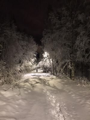 Gångvägen norr om Norra berget. Bild: Helena Albertsson