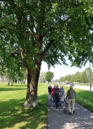 """""""Ett härligt gäng med pensionärer vid Dagcentralen Knutens promenadgrupp,  som är ute tillsammans i det vackra vädret."""" Foto: Susanne Sundin, Hallsberg"""