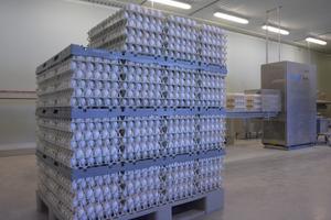 Peter och Fredriks höns producerar ungefär 28 000 ägg om dagen.