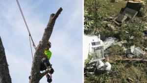 """Arborist kritisk mot kommunens hantering av djurkyrkogården: """"Vi har tagit ner träd där utan skada"""""""