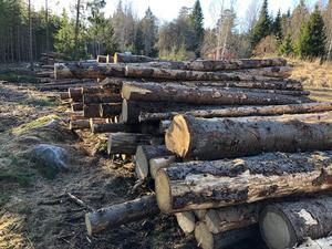 Skadat virke i väntan på bortforsling. För skogsägare inom Skogsstyrelsens bekämpningsområde är kraven extra höga på snabb bortforsling av virke som skadats av granbarkborre. Här ett upplag utanför Glanshammar.