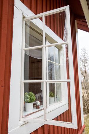 Fönstren är av gammalt fint kärnvirke och Mattias har kostat på en renovering av dem, berättar han.