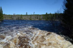 Stora mängder vatten passerar Skifsforsen just nu, de är väldigt nära rekordet på 700 kubikmeter i sekunden.