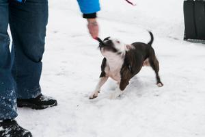 Löst springande hundar som attackerar människor och andra hundar har blivit allt för vanligt, enligt mannen bakom ett medborgarförslag om skärpt kopplingstvång.Foto: Karin Rickardsson