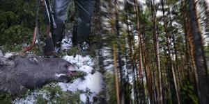Insändarskribenten är skogsägare i första hand och jägare i andra hand, därför prioriterar han organisationer som jobbar för att minska viltskadorna. Bilder: Fredrik Sandberg/TT / Hasse Holmberg/TT