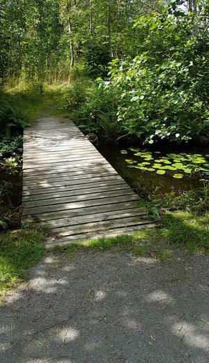 Gick Gröna gången när jag kom till den här lilla fina bron över vattnet i närheten av Måns Ols. Foto: IngMarie Ekman