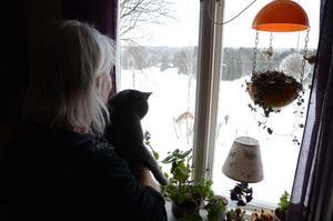 Katten Linus är nyfiken på rådjuren, men de är lite för stora, då är gräsandsungar roligare för honom.