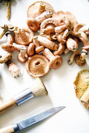 Naturintresset fick Shalony van Stralendorff redan som barn när hon följde med sin mormor och morfar på svamp- och bärturer i skogen.