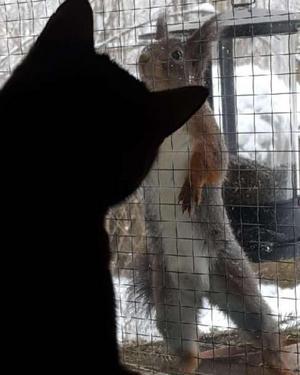 Februari. En modig ekorre och en nyfiken katt knep förstaplatsen. Foto: Tina Englund