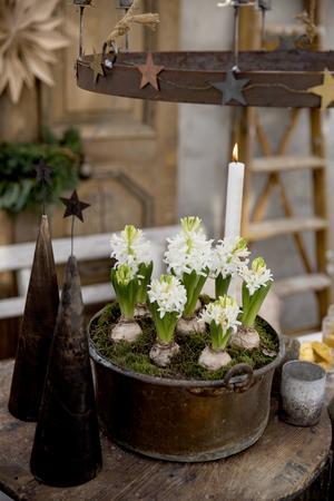 Vita hyacinter är ett måste till jul. tycker Maria. För doften.