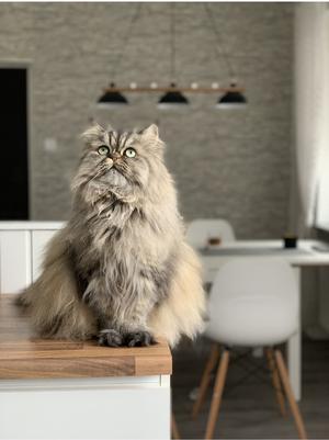 Här är Dexter 4 år som funderar på årets lussekatt! Bild: Jessica Strandberg