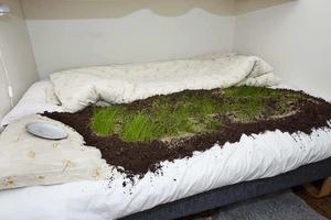 Gräset hade vuxit cirka 15 centimeter i jorden som mannen hällde ut i kvinnans säng. Foto: Polisen