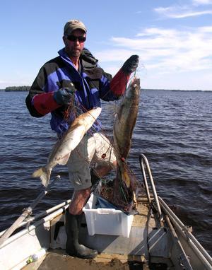 Storsjöns fiskevårdare Lars Ljunggren med ruttnande fångst i nät som beslagtagits. Bild: Uffe Stridsberg