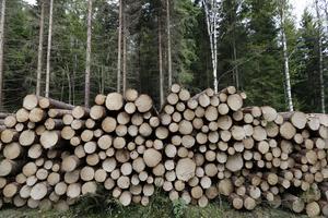 Skogen är en råvara som kan hjälpa Sverige att nå klimatmålet snabbare. Foto:  Vidar Rudd/TT