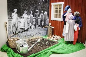 Sommarens utställning på Ljusdalsbygdens museum handlar om arkitekten och byggmästaren Olof Engberg. Här fotograferas han i potatislandet tillsammans med familjen.