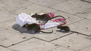 Råttor som lämnat kloakerna. En moderatledares syn på meningsmotståndare? (Foto: Johan Nilsson / TT)