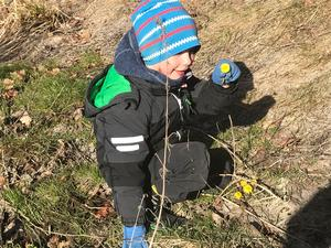 Ludwig med första tussilagon i Grovstanäs. Foto: IngMarie Meyer