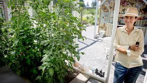 I växthuset driver Henrika upp tomater och basilika. Enligt feng shui ligger växthuset i rikedomens väderstreck.