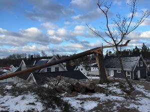 I Björnö föll många träd under natten.