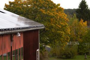 Sven-Erik berättar att det finns en önskan om att i framtiden försörja gården till 100 procent med förnybara energikällor.