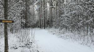 Skog som kommunen planerar skövla till förmån för villor med sjöutsikt. Foto: Privat