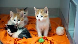 Kvinnan åtalas nu för bland annat djurplågeri. Katterna på bilden har inget med händelsen att göra. Foto: Maja Suslin / SCANPIX