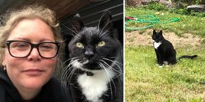 Pernilla Nylander Gustafsson har återförenats med familjens katt Musse som varit på rymmen i två år – det senaste året i Ulvshyttan i Dalarna. Hon är den som mestadels sköter katten då pappa Ove Gradin, som bor i Kungsängen i Upplands-Bro kommun, inte orkar på grund av sjukdom.