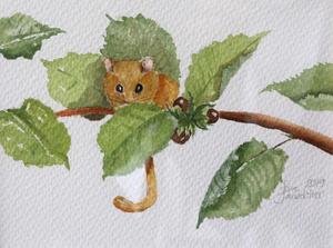 Hasselmusen kikar fram bland bladen.